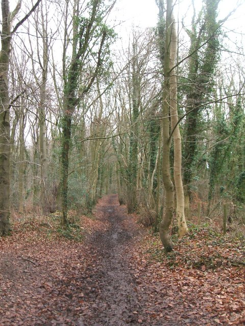 Cotswold Way, Standish Woods