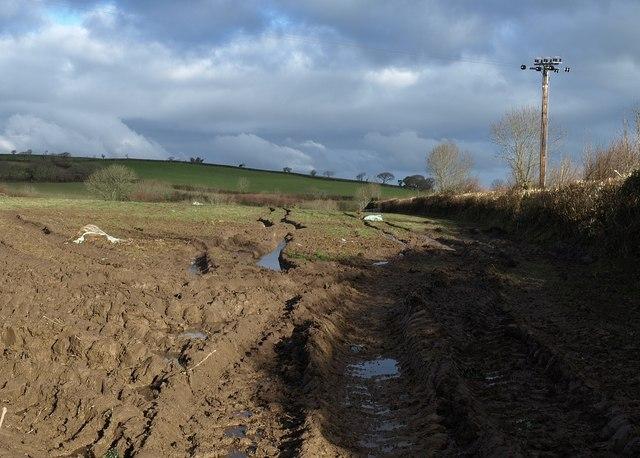 Field, Tregeare Down