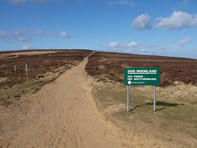 Track heading across Great Ayton Moor