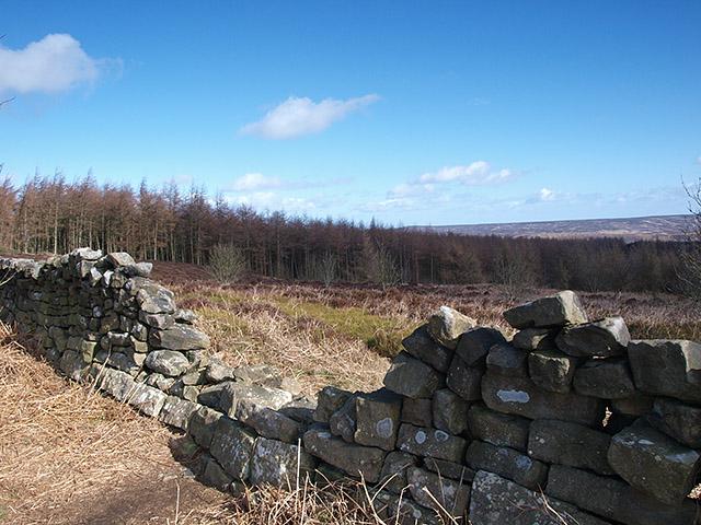 Damaged wall, Easby Moor