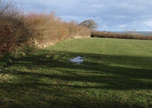 Field boundary on Tregeare Down