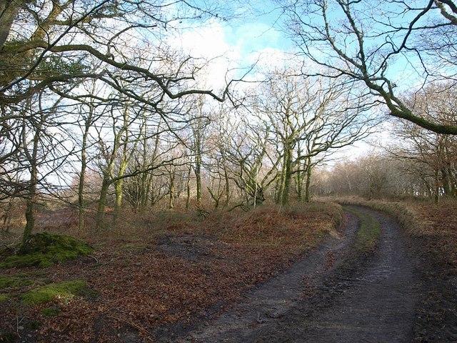 Access land, Tregeare Down