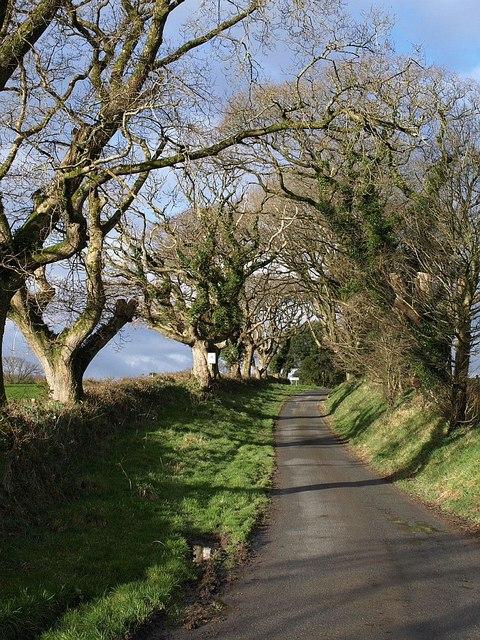 Lane approaching Tregeare