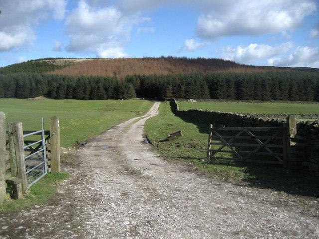 Track to Rivock Plantation