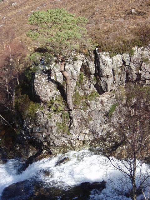 Scots pine perched above the Abhainn Garbhaig