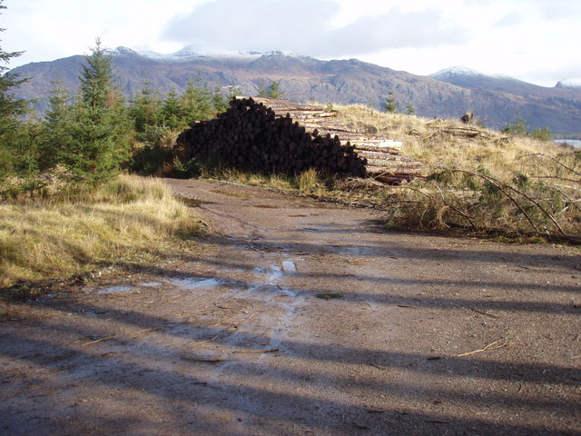 Log pile by the forestry road