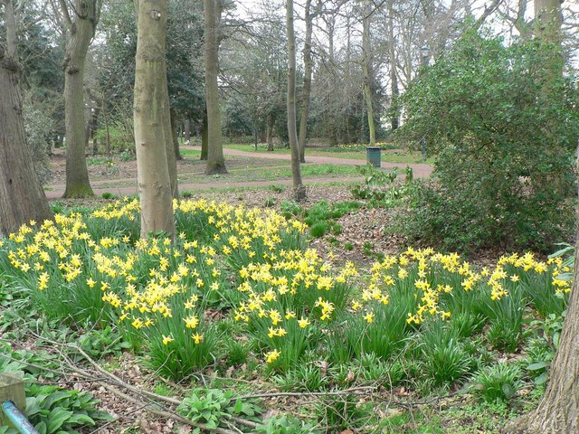 Southbourne: daffs in Fisherman's Walk