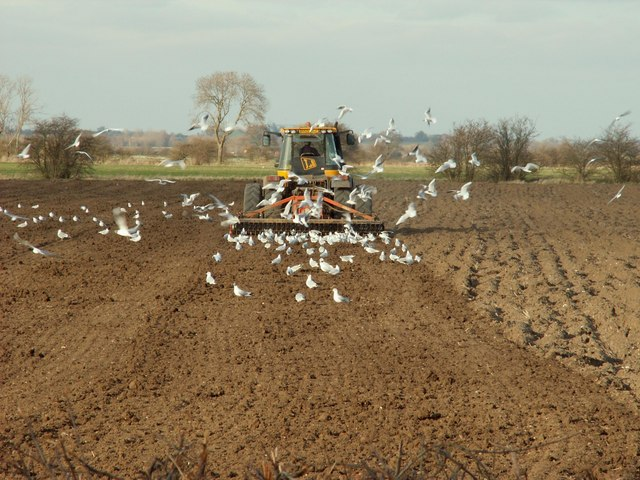 Ploughing the field at Newman's Farm