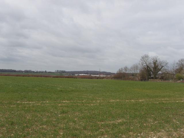 Field of wheat at Handy Cross