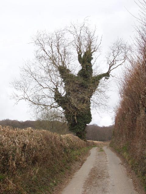 Menacing ivy-clad tree