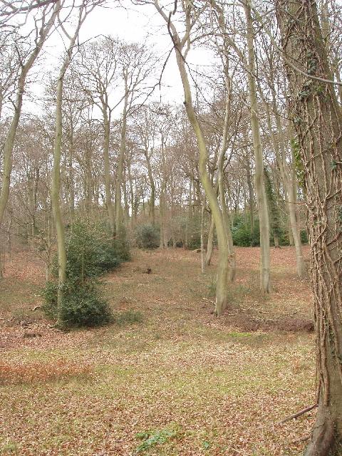 Lower Ground Wood