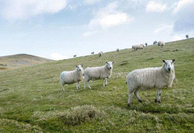 High farmland with sheep