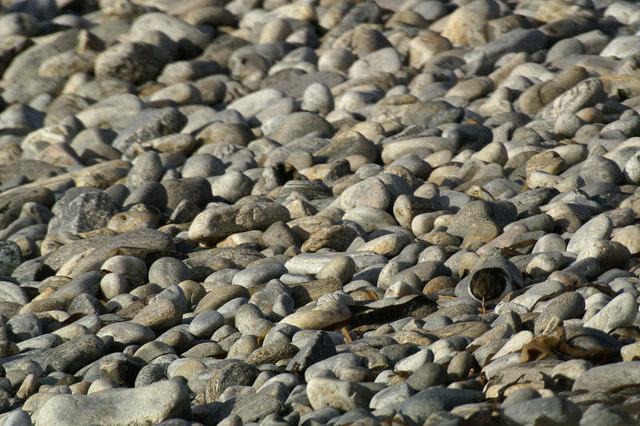 Coarse pebble beach