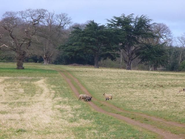 Footpath Across Park Pale