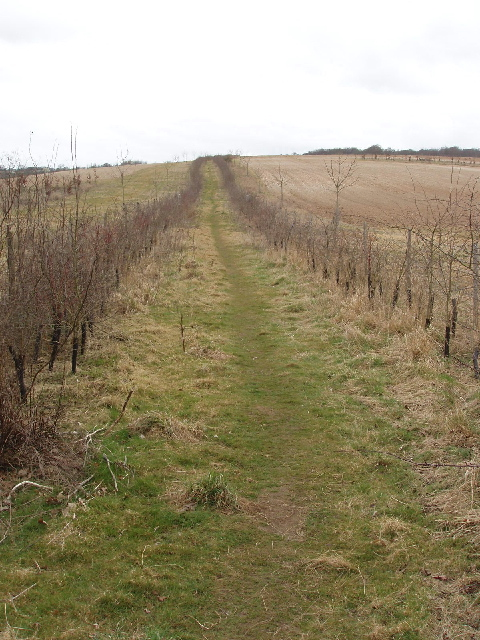 New fence and hedge enclose footpath