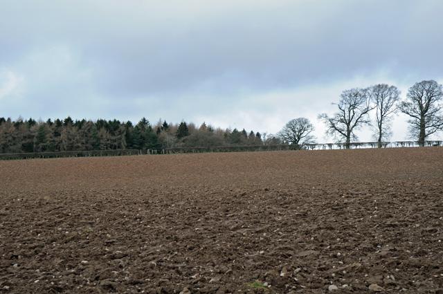 Farmland and Wood