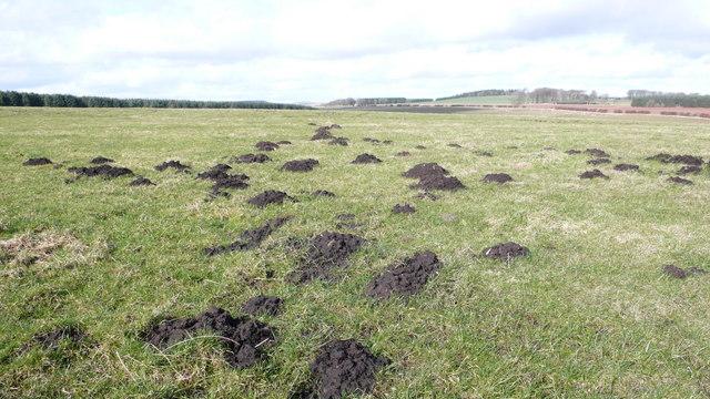 Mole Hills on Corsbie Moor