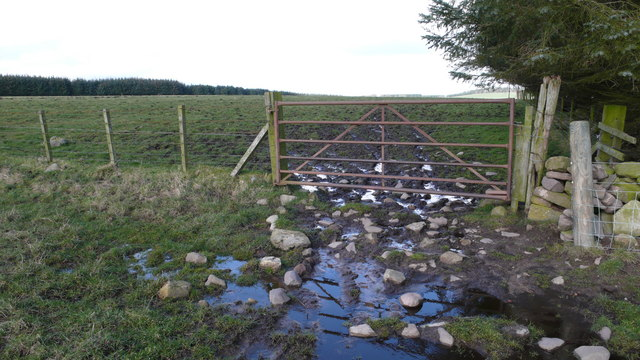 Gate at Forestry edge