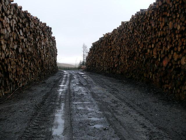 Staciau Coed/Log Stacks