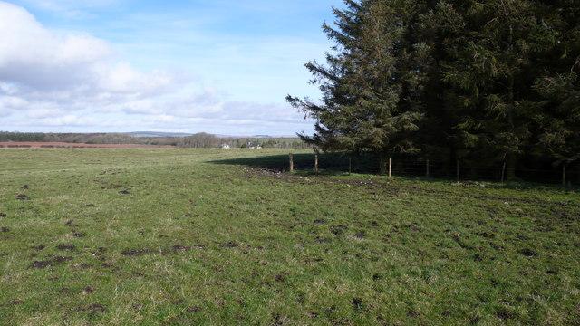 Forestry, Corsbie Moor