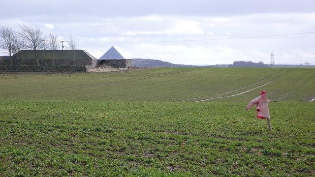 Scarecrow, Bellitaw Farm