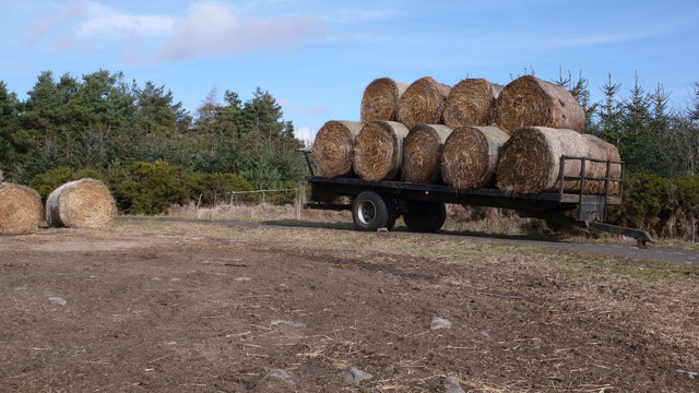 Round Bales, Bellitaw