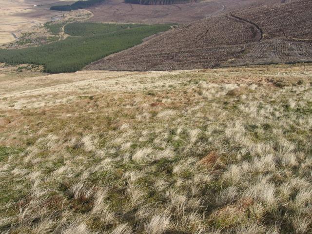 Meikle Shag hillside