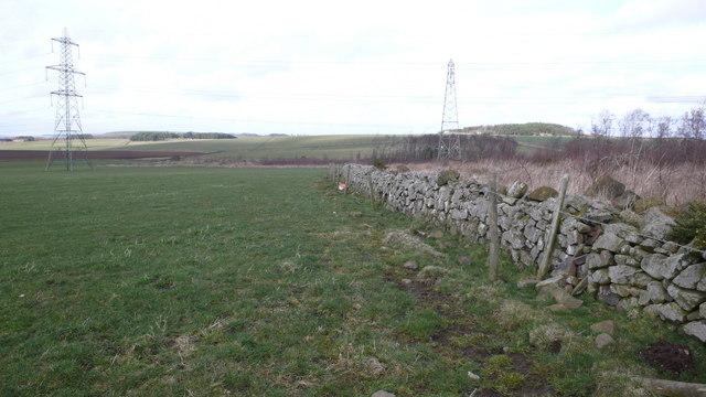 Field edge, The Bield