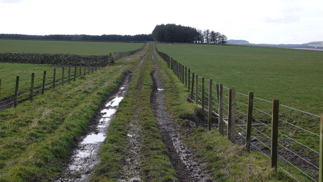 Farm track, The Bield