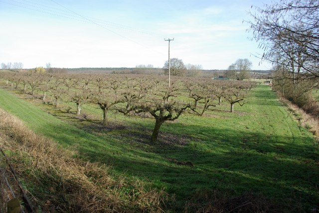 Orchard, Chartham Hatch.