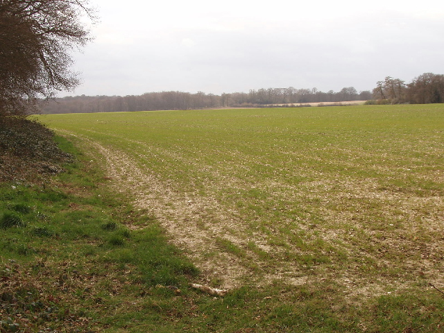 Winter wheat near Flackwell Heath