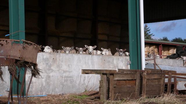 What 'ewe' looking at?