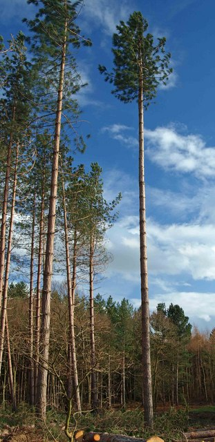 Tall trees in Haw Park