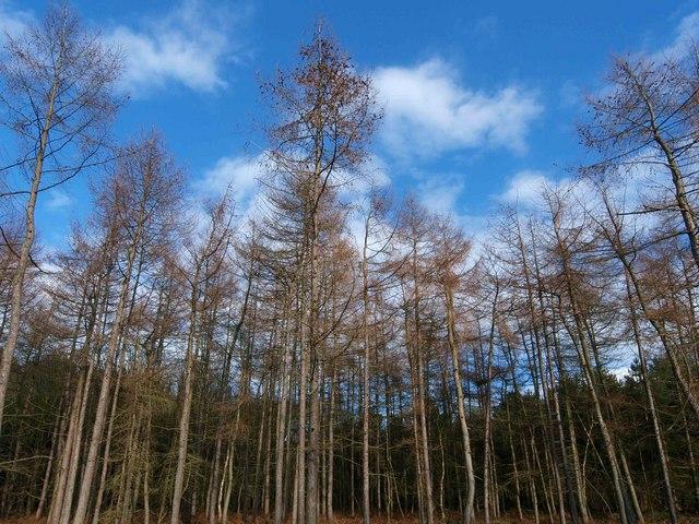 Haw Park Wood trees