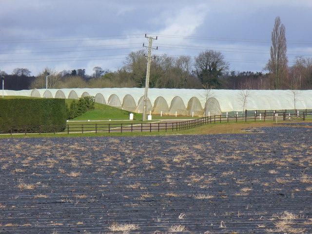 Home Farm, Shackleford