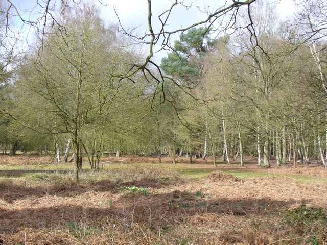Woodland, Norney