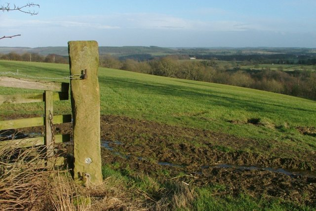 Stone Gate Post, Above Peterelfield Plantation