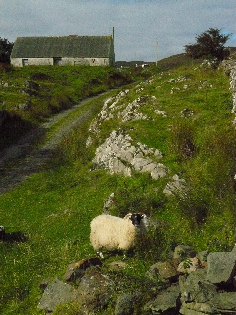 "View of a Neighbour from the back of ""The Lodges"", Scalasaig"