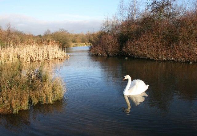 Swan Pool, West Bromwich.