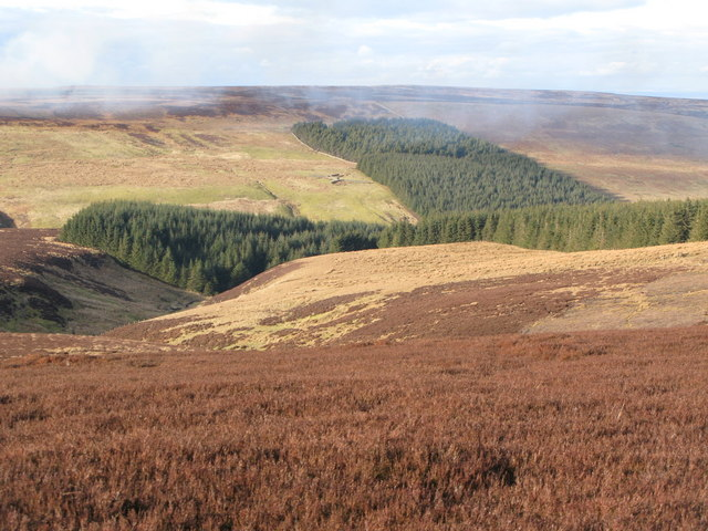 Grindstone Cleugh and Whitelees Plantation (2)