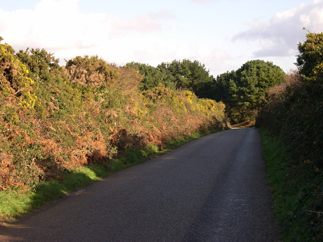 Country Lane with Gorse