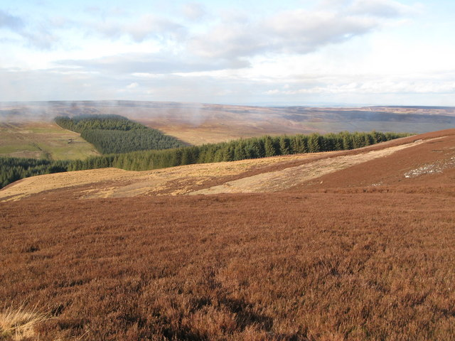 Moorland east of Grindstone Cleugh, and Whitelees Plantation