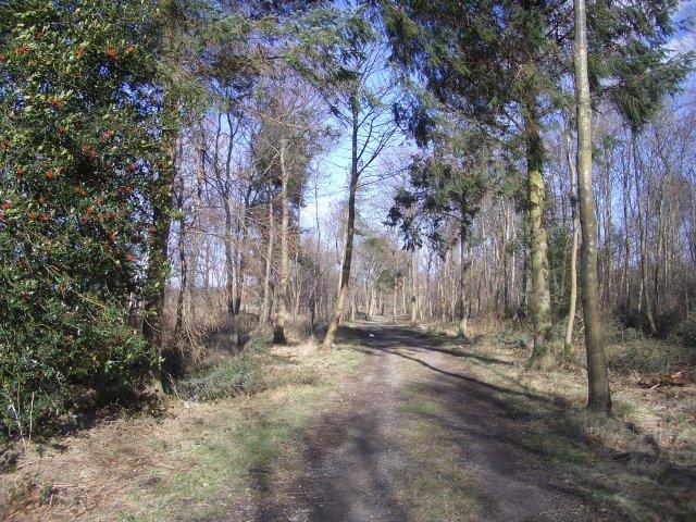Walk Plantation