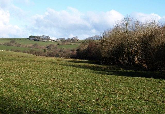 Meadow below Badgall Downs