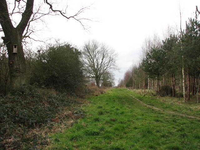 Footpath through Pigney's Wood