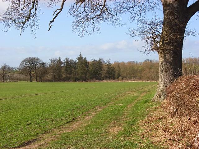 Farmland and copse, Shirburn