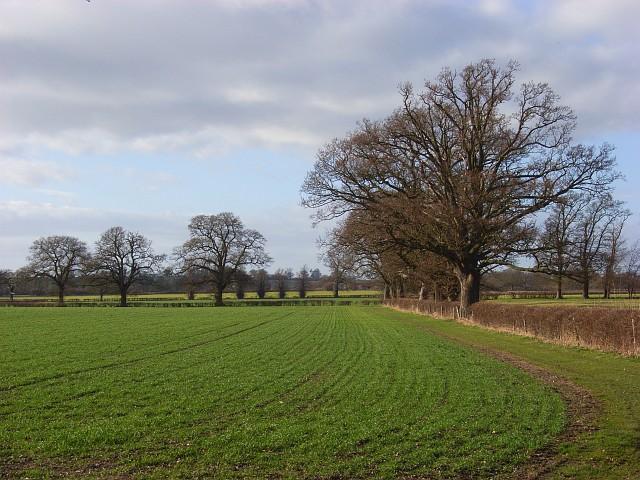 Farmland, Shirburn