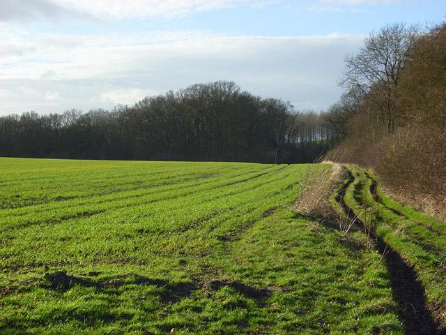 Farmland and bridleway, Pyrton
