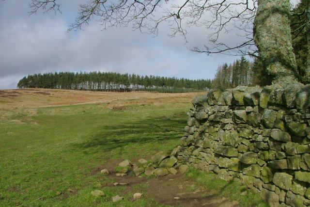 Wall Corner, Cushat Wood