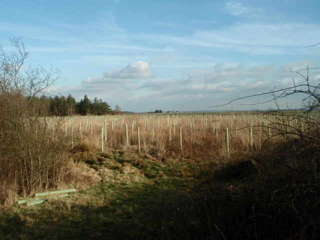 Sawtry Gorse Replanted